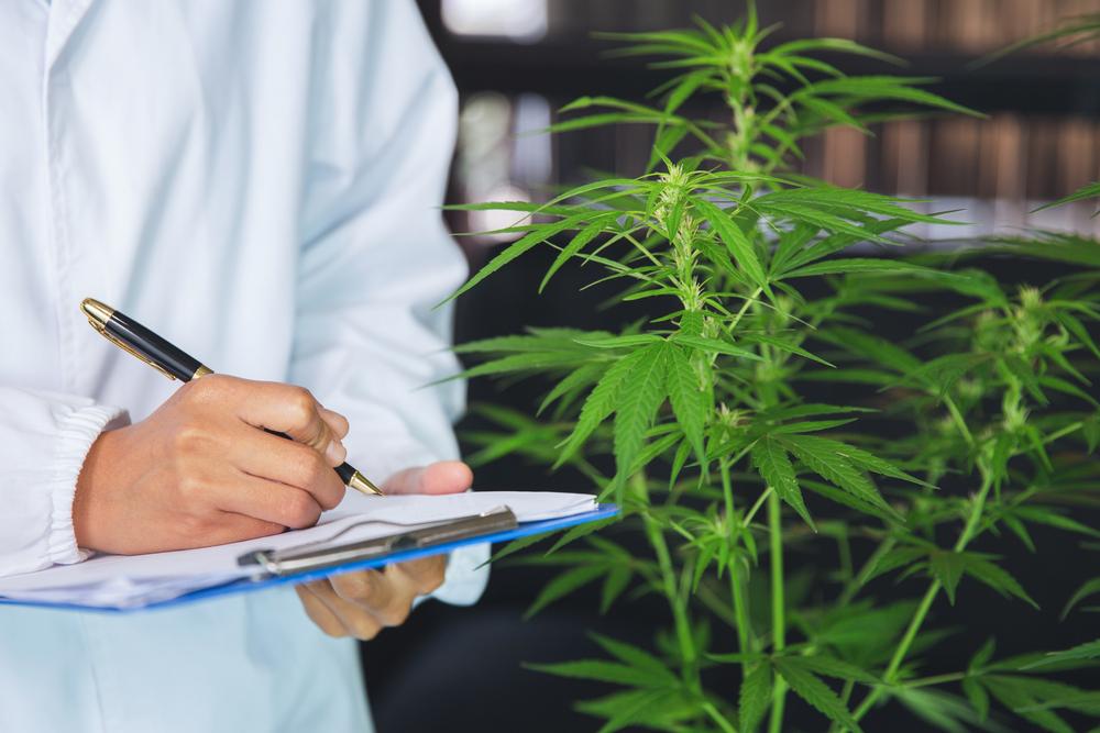 Laboratorio Cannabis